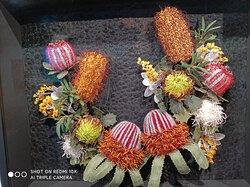 3D Australian native flora display