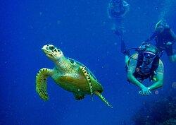 Turtles on the reef