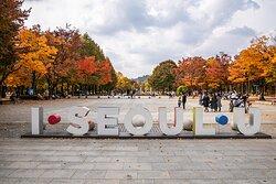 10월의 마지막 날 가을을 만끽하러 나온 시민들이 서울숲을 즐기고 있다.