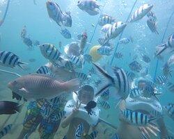 Sea TREK VietNam
