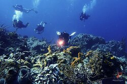 Aldora Divers - Only the best of Cozumel 029