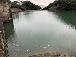 Tai Tam Reservoirs with fish