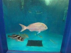 越前松島水族館 2