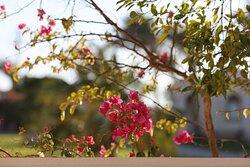 Beautiful gardens throughout.
