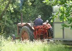Our neighbour's old fashioned tractor brings cows to Wheatland Farm for their summer grazing.