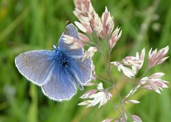 Wheatland Farm is a nature reserve, and in the summer you may spot common blue butterflies on the wing.