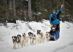 Howling Dog Tours