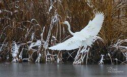 Observation des oiseaux lac de Neuchâtel