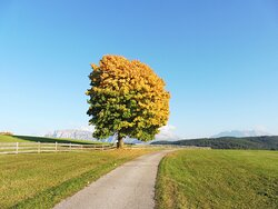 Herbst am Ritten Autunno sul Renon Autumn at Ritten-Renon