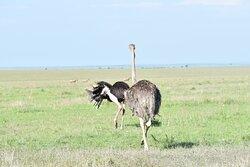 Pathway Safaris, the ultimate safari destination company to look for.