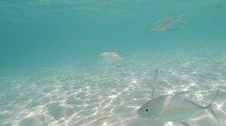 Crystal clear water... beautiful fish.