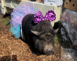 """""""Bella"""" dressed up for Halloween!"""