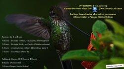 Curso colibries 1ra parte - Bogota Birding & Nature Colombia Tours swww.bogotabirding.com