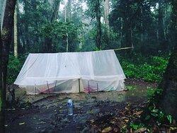 CROSS Borneo  www.tanjung-puting.com