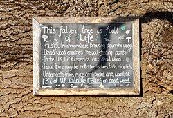 The Fallen Tree plaque