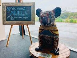 Hello Koala - Nulla -  Macleay Valley Coast Visitor Information Centre