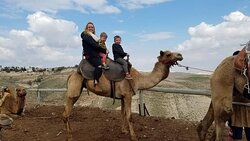 Camel riding in the Judean desert