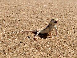 Living Desert Adventures