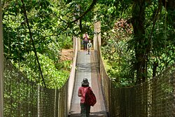One of two hanging bridges inside the nature reserve.