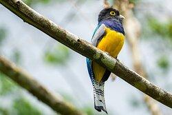 The #1 birding hotspot in Costa Rica.