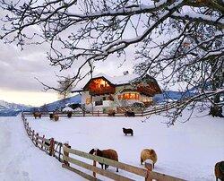 Oberplunerhof Winterfoto - auch unsere Schafe sind beim Shooting dabei