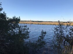 Big Branch Marsh National Wildlife Refuge - view of Bayou Lacombe  at end of 2.5 mile trail 01 02 21