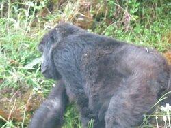 Gorilla trekking trip