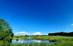 Clear Blue Sky by the Pond