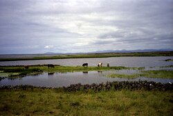Inis Mor Horse Carriage tours