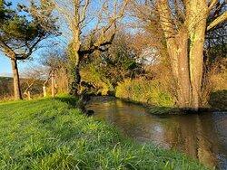 A fresh frost stream-side.