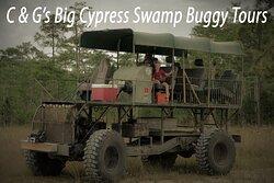 C&G's Big Cypress Swamp Buggy Tours