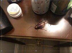 Cockroach invasion