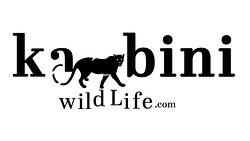 Kabini Wildlife Safari - Day Tour