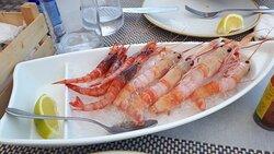 shrimp and langoustines