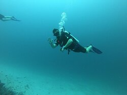 Amazing experience and dives