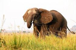 @Tarangire National Park