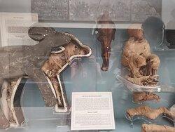 Мумии животных