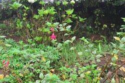 Rose Gardens - Unique flowers