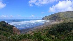 On the Te Henga Trail
