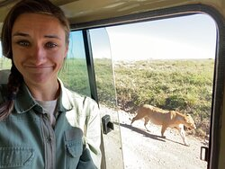 So close to lions in the Serengeti!