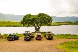 Safari jeeps stopped for lunch