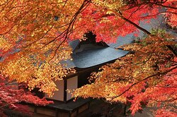 金堂前から見下ろす紅葉と五大堂