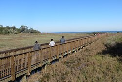Near Observation tower. Aransas National Wildlife Refuge, Austwell, TX .  Dec 2020