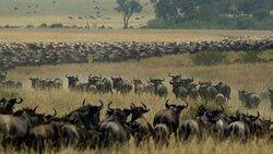 Migration Serengeti