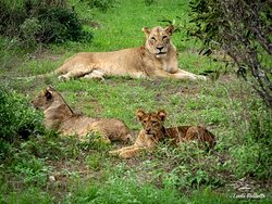 Mom's and cubs