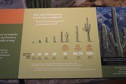 About Saguaro