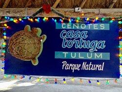 Cenotes Casa Tortugas Tulum