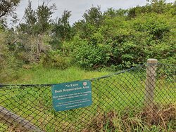 Lots of weed thickets such as lantana along the wat