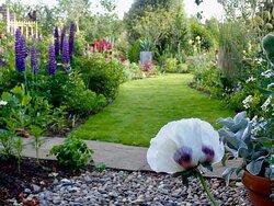 In 2020 we recreated much of the garden, Ardan garden, Howth