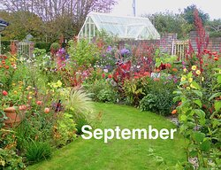 Ardan Garden, Howth,  continues to flower into the autumn
